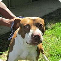 Adopt A Pet :: Victor - Rocky Mount, NC