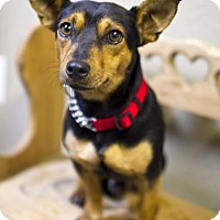 Adopt A Pet :: Abe----Spunky fun boy---N  VIDEO - Alvin, TX