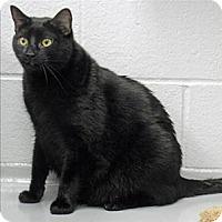 Adopt A Pet :: Nibbles - Topeka, KS