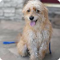 Adopt A Pet :: HAYDEN - Mission Viejo, CA
