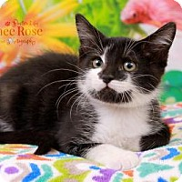 Adopt A Pet :: Froggy - Sterling Heights, MI