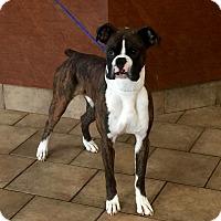 Adopt A Pet :: I'M ADOPTED Wilbur - Oswego, IL