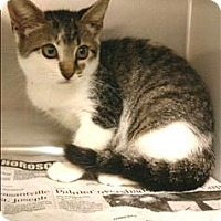 Adopt A Pet :: Sunny - Atlantic City, NJ
