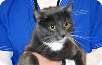 Domestic Mediumhair Cat for adoption in Wildomar, California - Candy