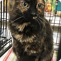 Adopt A Pet :: Bonnie Blue - Riverside, CA