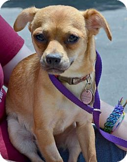 Adopt A Small Dog Kansas City