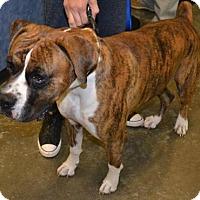 Adopt A Pet :: Rocky - Rockwall, TX