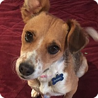 Adopt A Pet :: Isabel - San Leandro, CA