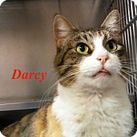 Adopt A Pet :: Darcy - El Cajon, CA