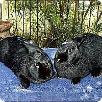 Adopt A Pet :: Lyssa & Marta - Phoenix, AZ