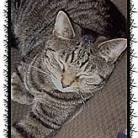 Adopt A Pet :: Lexi - Hazard, KY