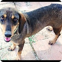 Adopt A Pet :: Abby - Meridian, MS