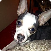 Adopt A Pet :: Reilley *Courtesy Posting* - Romeoville, IL