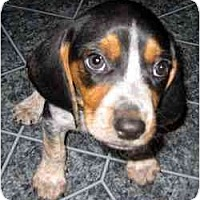 Adopt A Pet :: Vladimir - Novi, MI