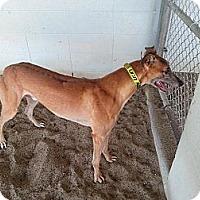 Adopt A Pet :: Lions Share - Vidor, TX