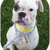 Adopt A Pet :: Petunia - Sunderland, MA