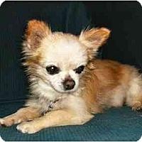 Adopt A Pet :: Ivan - Mooy, AL