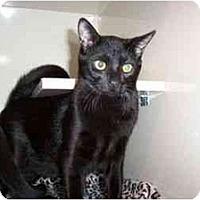 Adopt A Pet :: Felipe - Secaucus, NJ