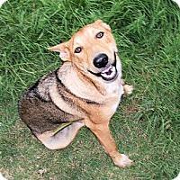 Adopt A Pet :: Max - Waller, TX