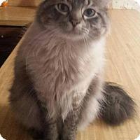 Adopt A Pet :: Plato - Ennis, TX