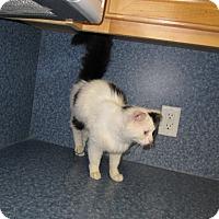 Adopt A Pet :: Gracie - Harrisburg, NC