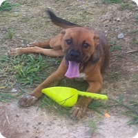 Adopt A Pet :: Avery - Brazil, IN