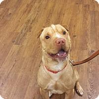 Adopt A Pet :: Monroe - Lake Odessa, MI