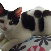 Adopt A Pet :: Lilo - Stafford, VA