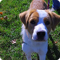 Retriever (Unknown Type) Mix Dog for adoption in East Smithfield, Pennsylvania - Houdini
