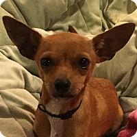 Adopt A Pet :: Bree - San Marcos, CA