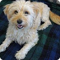 Adopt A Pet :: 'RUFFLES' - Agoura Hills, CA