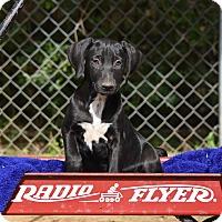 Adopt A Pet :: Jo Nell - Groton, MA