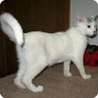 Adopt A Pet :: Ryder - Powell, OH
