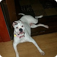 Adopt A Pet :: zena - Salem, OH