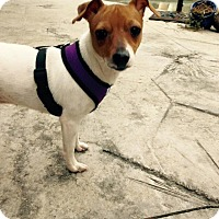 Adopt A Pet :: Janie - Groveland, FL