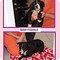 Adopt A Pet :: Erin - Harmony, Glocester, RI