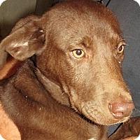 Adopt A Pet :: Gordon - Germantown, MD