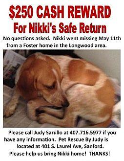 Coonhound/Treeing Walker Coonhound Mix Dog for adoption in Sanford, Florida - Nikki- LOST & MISSING