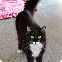 Adopt A Pet :: Anri - Michigan City, IN