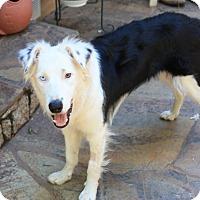 Adopt A Pet :: SKY - Corning, CA