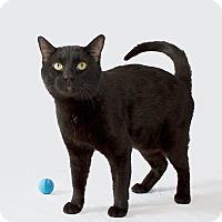 Adopt A Pet :: Valor - Schererville, IN