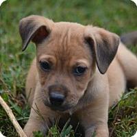 Adopt A Pet :: Milton - Doylestown, PA
