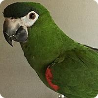 Adopt A Pet :: Poco - Asheville, NC