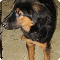 Adopt A Pet :: John - Coventry, CT