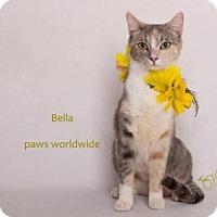 Adopt A Pet :: BELLA - Westlake, CA