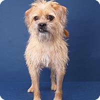 Adopt A Pet :: Shay - Sudbury, MA
