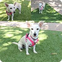 Adopt A Pet :: Wimberly - Hamilton, ON