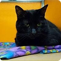 Adopt A Pet :: Cleopatra - Elyria, OH