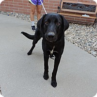 Adopt A Pet :: SHAGGY - Sioux City, IA