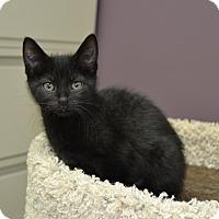Adopt A Pet :: Belle - Wheaton, IL